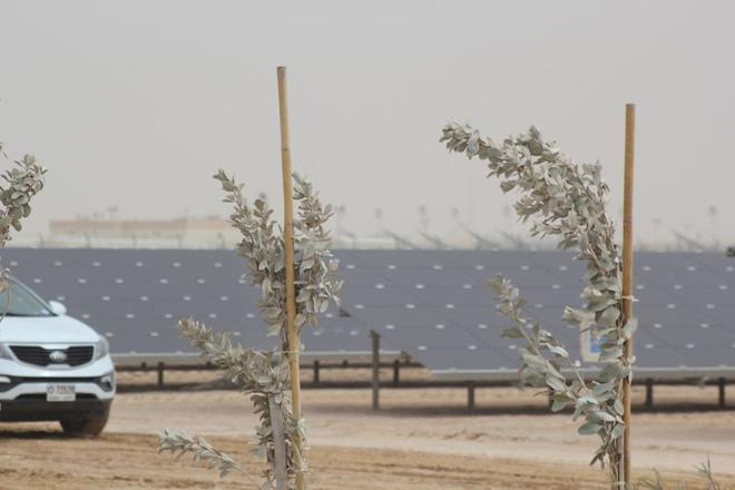 Những tấm pin năng lượng mặt trời ở Dubai. Ảnh: Bloomberg